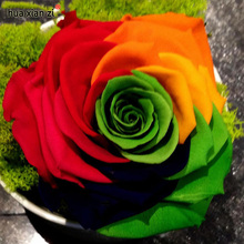 Crazy Promotion Rainbow Rose seeds DIY Home Garden Colorful Rose Flower Plant 1 Pack 50 seeds(China)