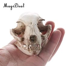 MagiDeal 5 Styles Realistic Resin Cat / Head/Triceratops Skull Replica Medical Teaching Skeleton Model Ornament-Bar/Party Decor
