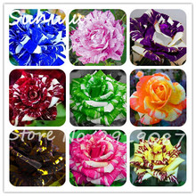 50 pcs rare tiger striped rose seeds bonsai beautiful flower seeds rainbow rose petals plant mix colors for home garden planting(China)