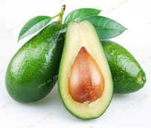 2016 10pcs New Rare Green Avocado Seed Very Delicious Pear Fruit Seed Very Easy Grow For Home Garden