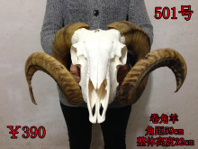 head Arts Crafts True sheep skull skull head ornament crafts Tibet yak pure natural sheep head hanging ornaments(China)
