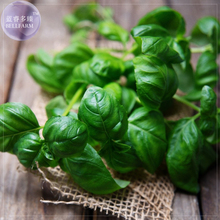 BELLFARM Sweet (Common) Basil Seeds, Professional Pack, 20 Seeds, make just about any dish taste delicious E4229(China)