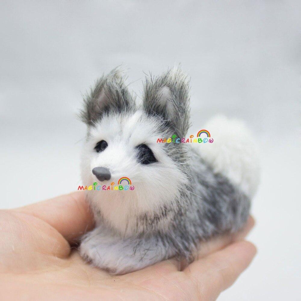M_Husky dog (11)