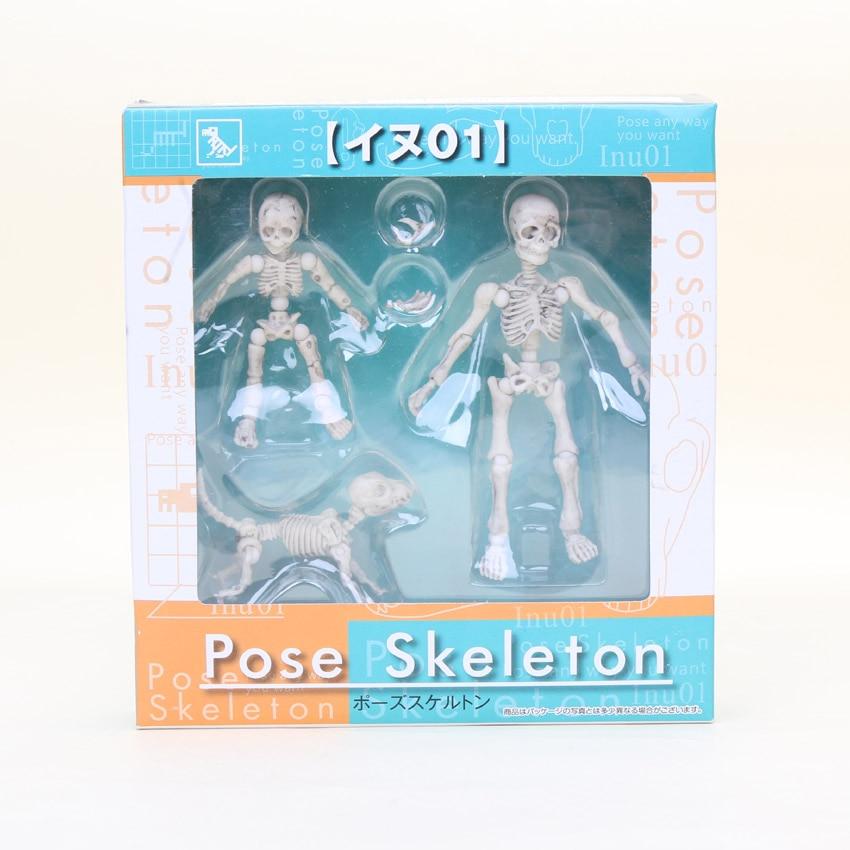 a human skeleton p99 – hd-m, Skeleton