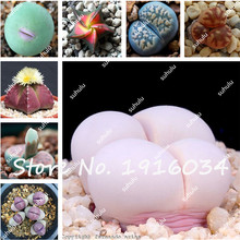 Cheap Sale 100Pcs/Bag Lithops Seeds Succulent Seeds Living Stone Flowering Seeds Indoor Bonsai Ornamental Plants DIY Home Garden(China)