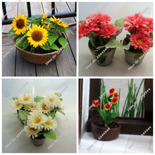 20pcs New Fresh Seeds Sunflowers Seeds, Balcony Potted Plants Sunflower seeds Bonsai Flower Seeds Easy to plant