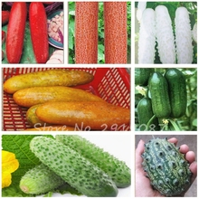 50 PCS Organic Cucumber Seeds Rare Fruit Vegetable Seeds, Polish Variety, The Budding Rate 95% Seeds for Home Garden(China)