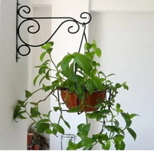 hanging basket Iron flower rack semi-circular wall coconut palm wall hanging basket plant living room Flower Decor Basket