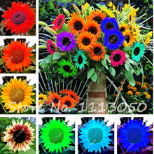 New !!! 20 Pcs Mini Multi-colored Dwarf Sunflower Seeds Perennial Flower Seeds For Home Garden Decor DIY Potted Plant