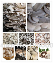 Delicious Mushrooms Seeds, 100 Pcs/bag Vegetable Seeds Rare Pleurotus Mushroom Strains Geesteranus Seed Easy Growing DIY Garden