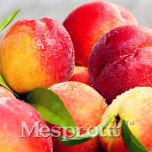 Top quality Promotion bonanza peaches, Peach Tree - Peach seeds - Fruit seeds bonsai seeds - 10 pcs Novel Seed(China)