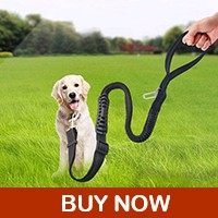 dog-leash_04