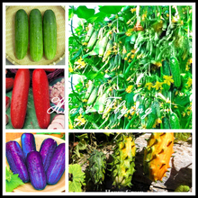 100 Cucumber seeds rare delicious Green fruit cucumber Fresh vegetable seeds  NO-GMO DIY farm home garden