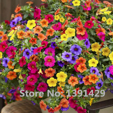 1Bag=200 Seeds Heirloom Hanging Petunia Mixed Seeds Color Waves Hanging Basket Petunia Beautiful Flowers Light Up Your Garden
