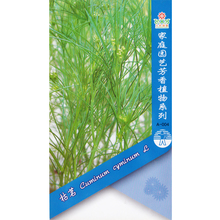 Cumin Seed * 100 Seeds * Cuminum cyminum L * Herb Vegetable Seed * Spice Seed * Starwest Botanicals(China)