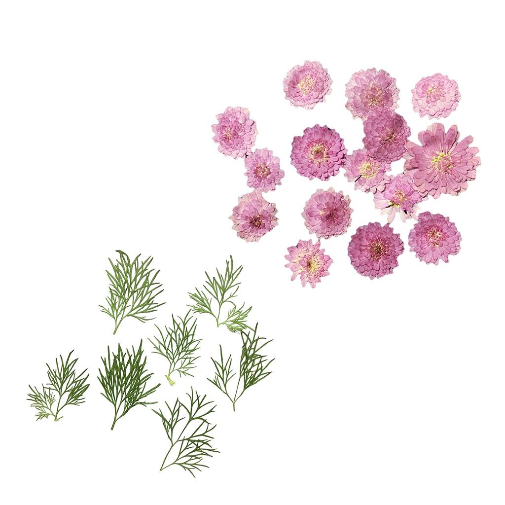 Pressed Dried Flower Flesh Flowers DIY Art Decor Craft Jewelry Making 20pcs