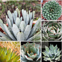 5pcs/lot mixed 100% Genuine Rare Agave seeds, Plant tree seeds herbs flower seeds Succulent Plant home garden Free Shipping(China)