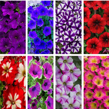 Big Promotion! 100 Pcs/Bag Rare Color Star Petunia Seeds Garden And Patio Potted Plant Morning Glory Flowers Seeds