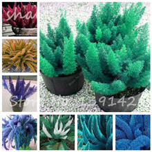 Lowest Price! 100 Pieces/pack Foxtail Seeds, Foxtail Ferns Bonsai Plants Perennial Flowers Natural Growth For Home & Garden