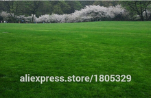 Lawn Seed 300pcs lawn Grass Seeds Fresh Green Soft Runner Natural Plant Free shipping
