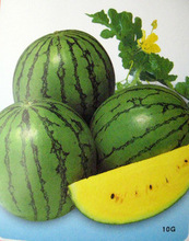 Small heart small watermelon skin yellow orchid organic vegetable seeds