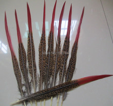 50 PCS/lot natural Golden pheasant tail Red head feather long 8-10 inches /20-25 cm accessories garment DIY decoration(China)