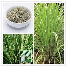 500pcs / Bag Lemon Grass Seeds home garden Herb plants Lemongrass Seeds Chinese Heirloom tea bonsai Diy plant potted Sementes