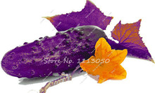 Hot Sale 30 Pcs Purple Cucumber Seeds Delicious Vegetables Bonsai Plant,Polish Variety Fruit Seeds,Semenatsvety Garden Annuals(China)