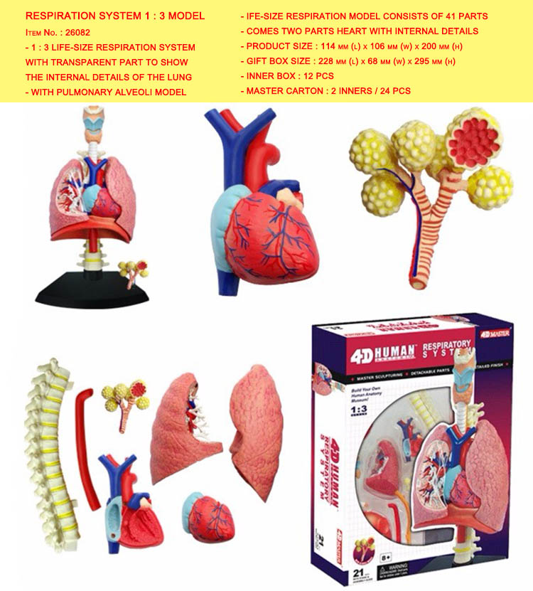 Detail Feedback Questions About 4d Master Model Colored Heart