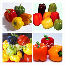 50 PCS Pepper seeds 6 Color mixed Yellow Purple Red Green Blue White Mix Sweet Bell Hot Pepper Seeds vegetables Paprika