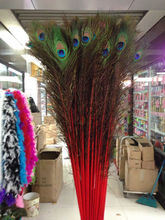 New! Red 50 pc quality natural peacock feathers, 28-32inches / 70-80cm DIY-  wedding, living room, decorated flower vase