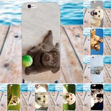 Dog Labrador Puppy Soft TPU Phone Cases Covers For Apple iPhone X 4 4S 5 5C SE 6 6S 7 8 Plus Galaxy Grand Core II Prime Alpha(China)