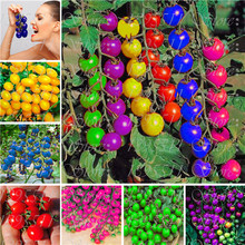 200pcs colourful cherry tomato seeds Balcony Fruits and Vegetables seeds Potted Bonsai Potted Plant Tomato Seeds Free Shipping(China)