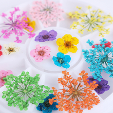 1 Box Mixed Dried Flower 3D Nail Art Decoration Preserved Flower Dry 3D Flower Tips Manicure DIY Wheel(China)