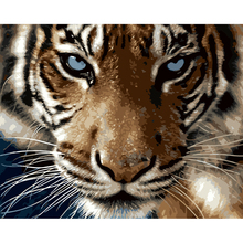 Modular DIY Tiger Animal Oil Painting By Numbers Canvas Paintings On The Wall Pictures Without Frame Living Room 40x50cm(China)
