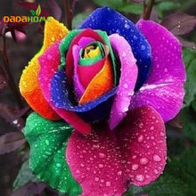 100 Seeds Rare Holland Rainbow Rose Flower Lover Multi-color Plants Home Garden Decoration rare rainbow rose flower seeds