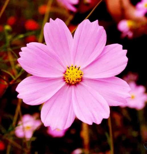 Common Garden Flowers Pink