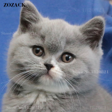 Zozack,DIY,5D,diamond painting,Full,Square,Rhinestones,animal,Gray,cat,Cross Stitch,diamond embroidery,diamond mosaic,decoration