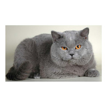 5D DIY Partial Diamond Painting Cross Stitch Fat Gray Cat Embroidery Mosaic Pictures Diamond Peinture Diamant