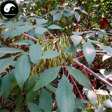 Buy Fraxinus Chinensis Tree Seeds 120pcs Plant Ash Tree For Fraxinus Bai La(China)