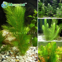 Promotion!!! 500 seeds mixed aquarium fish tank grass seeds water Aquatic plant seed Free shipping(China)