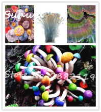 150Seeds/bag Special Colorful Mushroom Seeds Organic Delicious Funny Succulent Plant Ornamental Vegetable Plants For Happy Farm(China)