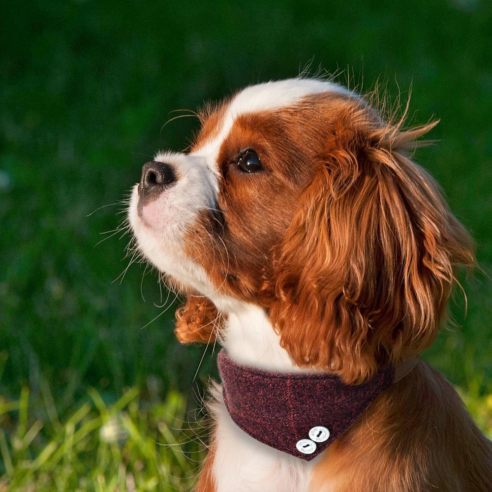 Gatos Petween Collares b/ásicos cl/ásicos Acolchados de Cuero para Mascotas Perros medianos y peque/ños Cachorros