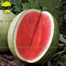 Fresh Sweet Melon Organic Watermelon Seed, 10 Seeds/Pack, Very Popular Tropics Fruit Citrullus lanatus For Planting Edible(China)