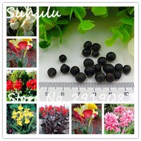 20Pcs-bag-Canna-Seeds-Mix-Colors-Diy-Potted-Plants-Seeds-Indoor-Outdoor-Pot-Seed-Germination-Rate.jpg_200x200