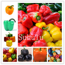 100Pcs Sweet Squqre Pepper Bonsai Colorful Mix High Quality Bell Chill Pepper Vegetables Paprika Home Garden Plants Easy Grow(China)