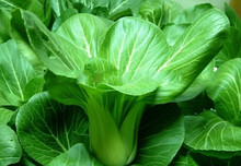 200pcs/bag Chinese Cabbage Seeds Green Vegetable Seeds,bonsai Seeds  For Sale Farmer Gardening Home Plants
