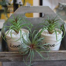 MINI Artificial fleshiness Air grass plant microlandschaft decorative flower home Balcony decoration 2 colors 1pcs(China)
