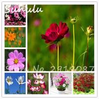 30pcs-bag-Rare-Calliopsis-Flower-Seeds-Beautiful-Flower-Seeds-Diy-Home-Garden-Planting-Easy-To-Grow.jpg_200x200
