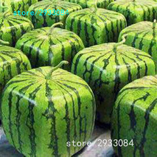 A Package 50 Pieces Seeds Rare Simple Geometric Square Watermelons Seeds Delicious Chinese Fruit Water Melon Seeds Home Garden